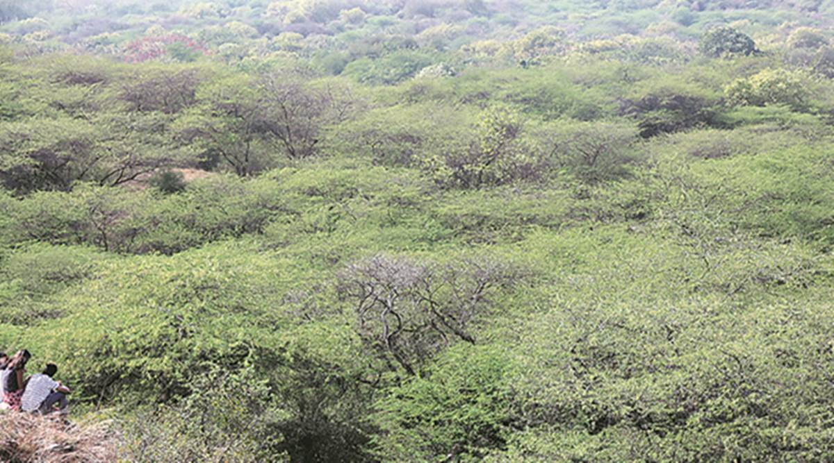 A view Delhi forest, a green cover area of Delhi.